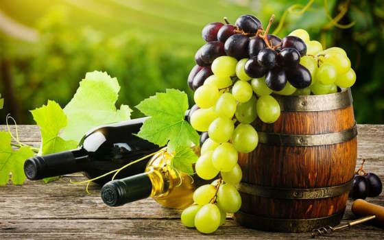 Enología: vinos y uvas