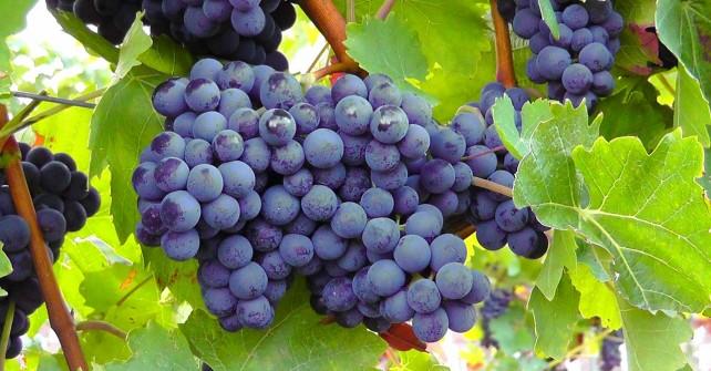 swetness red wine